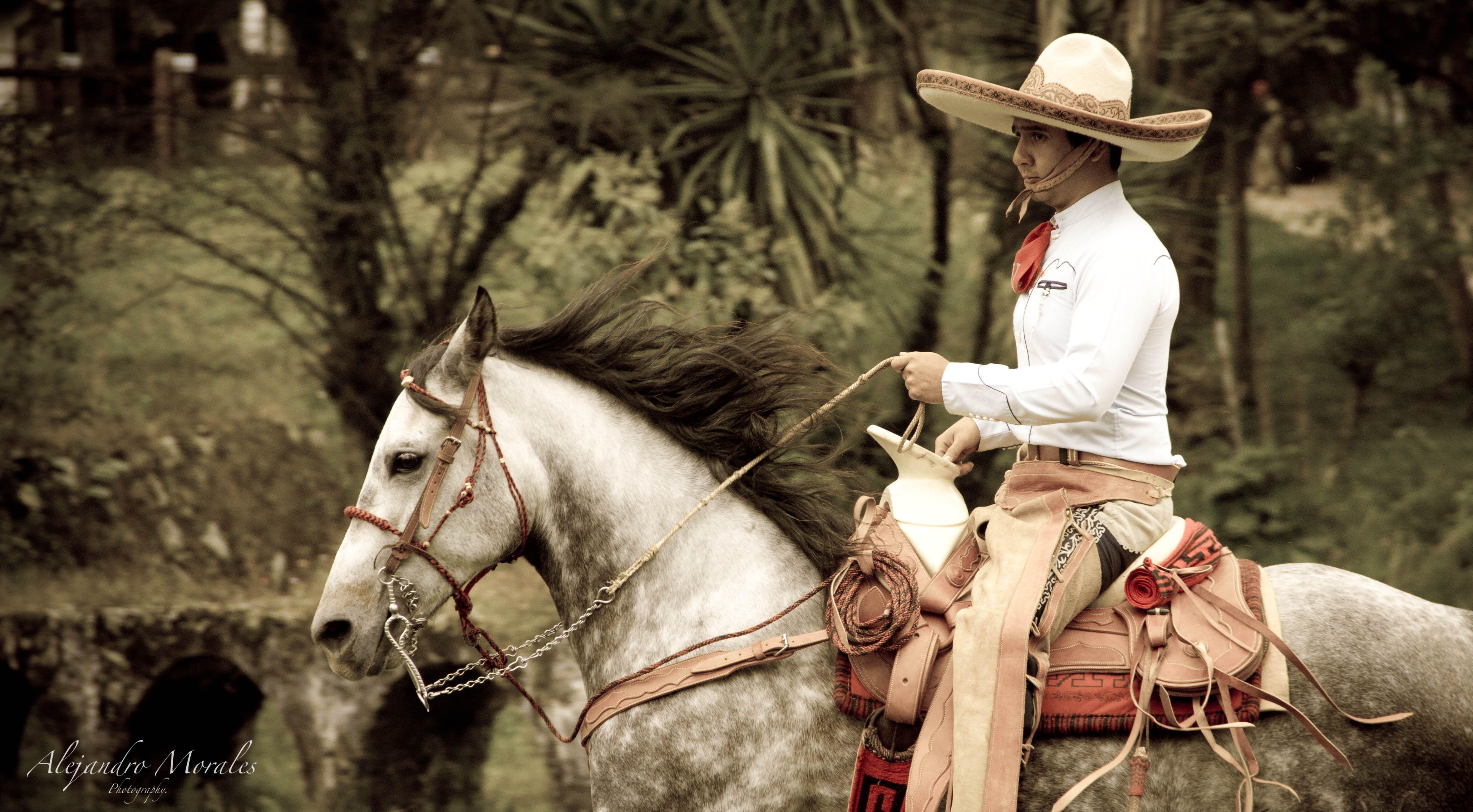 Charro galope caballo mexico sesion charra pinterest
