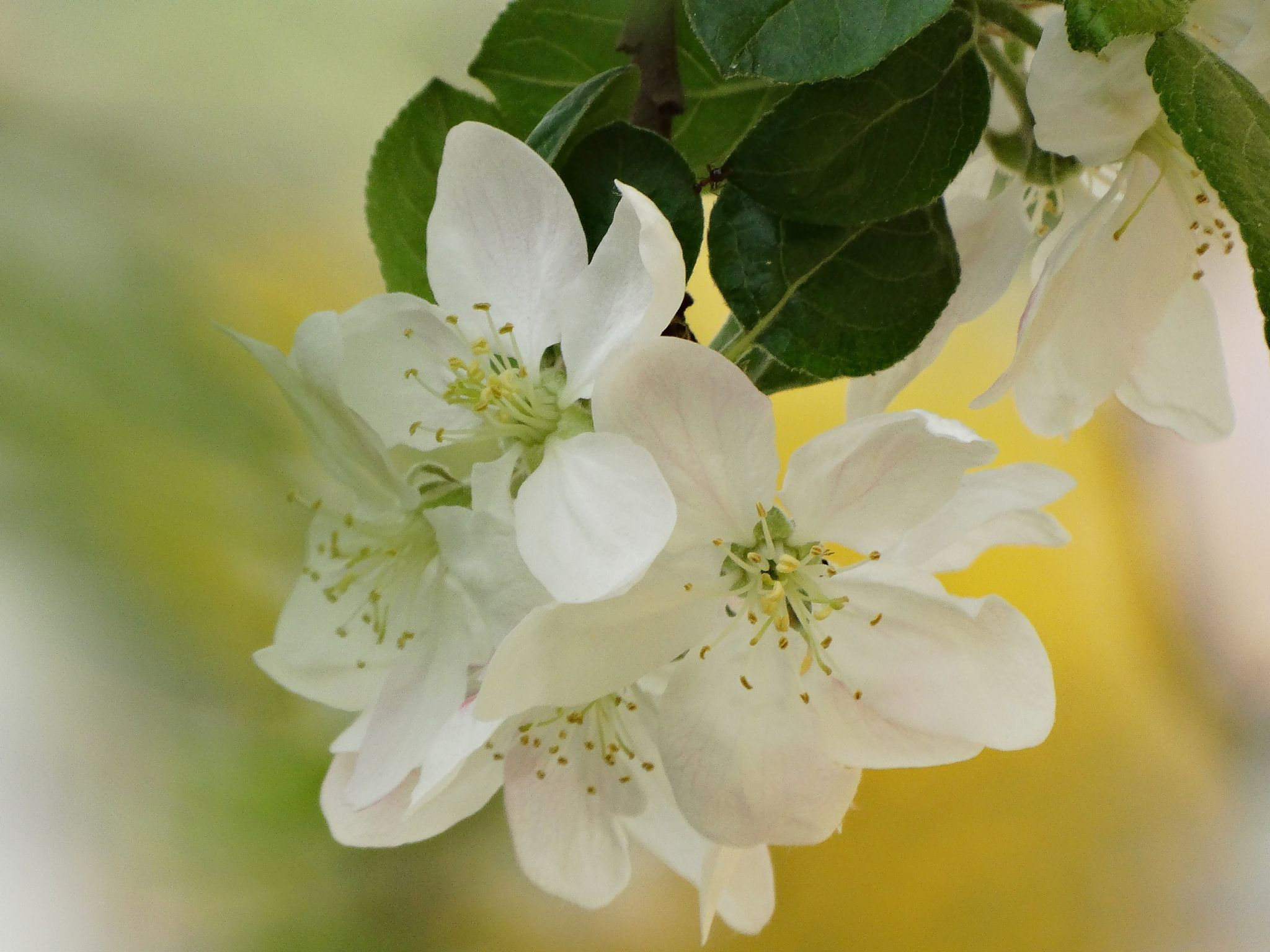 Spring Blossoms by dannety on 500px
