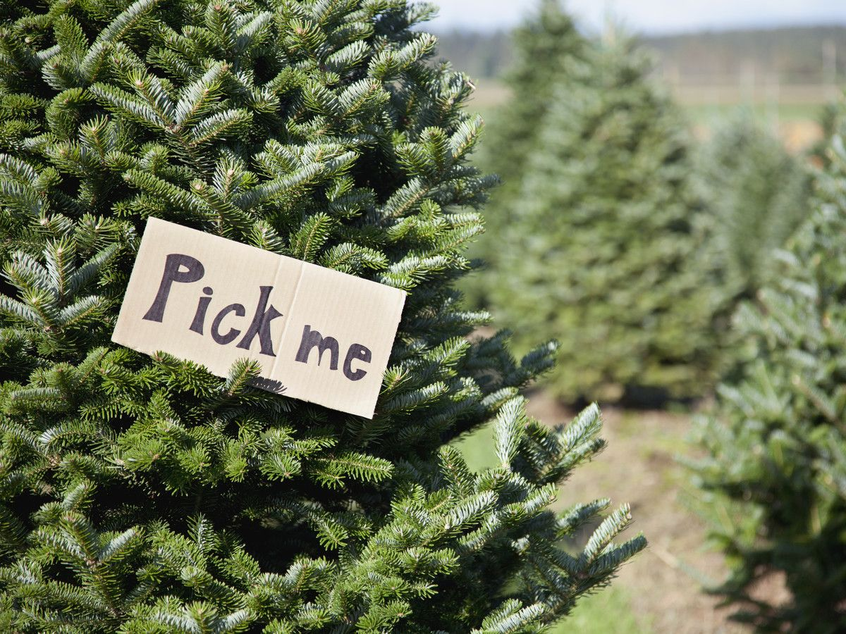12 Types of Christmas Trees to Know Before Heading to the