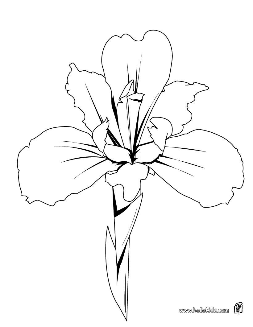 There Is The Iris Details Coloring Page Among Other Free Coloring Pages Perfect Coloring Sheet For Kids Iris Flower Tattoo Flower Crown Drawing Flower Drawing