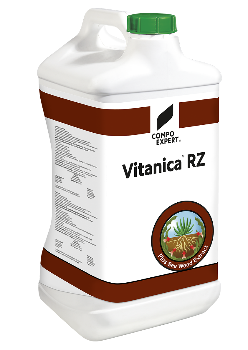 Vitanica RZ  Υγρός ριζοδιεγέρτης με υψηλή περιεκτικότητασε αυξίνες από το εκχύλισμα φυκιών Ecklonia maxima.  Η ειδική του σύνθεση μεταβάλλει την ορμονική ισσοροπία των φυτών ωθώντας τα στη δημιουργία νέων ριζικών τριχιδίων. Ιδανικό για υδρολίπανση στα πρώτα στάδια της καλλιέργειας των κηπευτικών αλλά και για τη δενδροκομία.  Σύνθεση: 40% εκχύλισμα φυκιών Ecklonia maxima ,5,1% συνολικό άζωτο, 5,2% K2O.  Διαθέσιμες ΣυσκευασίεςΧαρτοκιβώτιο 6x2,5 λίτρα