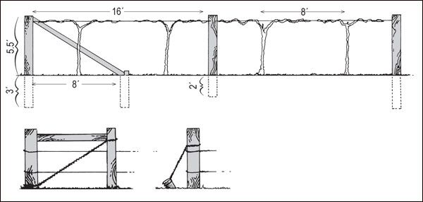 Construction details of a two-wire trellis and alternative