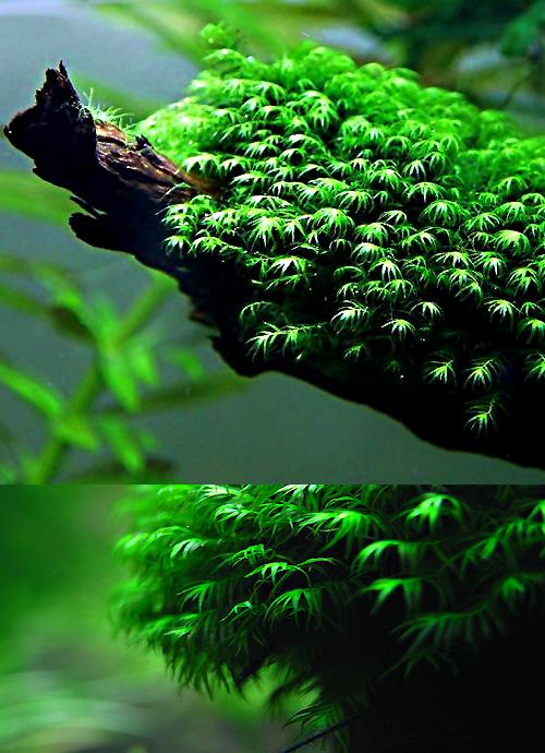AQ*44. Freshwater PlantsPlanted AquariumAquarium AquascapeNano ...