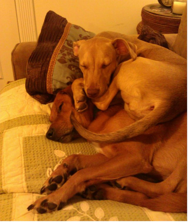 25 Derpy Dogs In Ridiculously Awkward Sleeping Positions