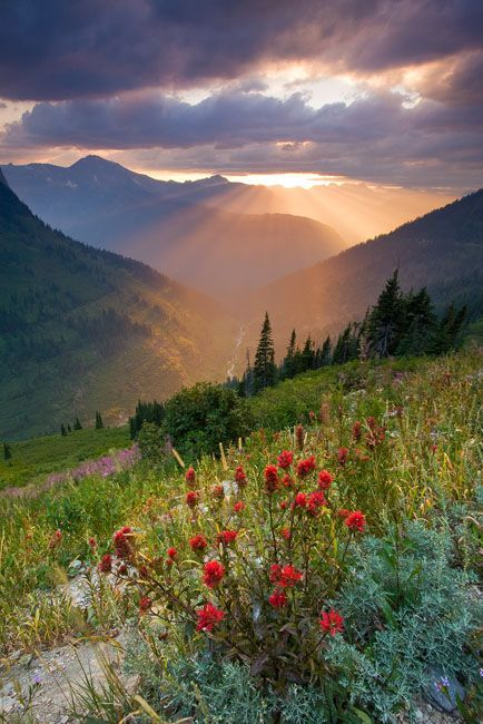 Going to the Sun Road, Glacier National Park, Montana  #nature