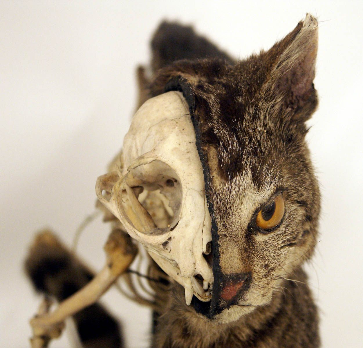 Taxidermy Conservation\'s Blog | A Year in the Life of a Taxidermy ...