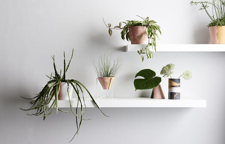 Trend Olive Desert Plantes en pots, Pots et Plantes