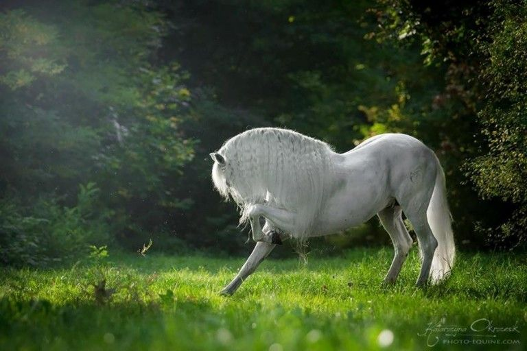 Top 10 Best Equine Photographers In The World Topteny Com Horses Andalusian Horse Pretty Horses