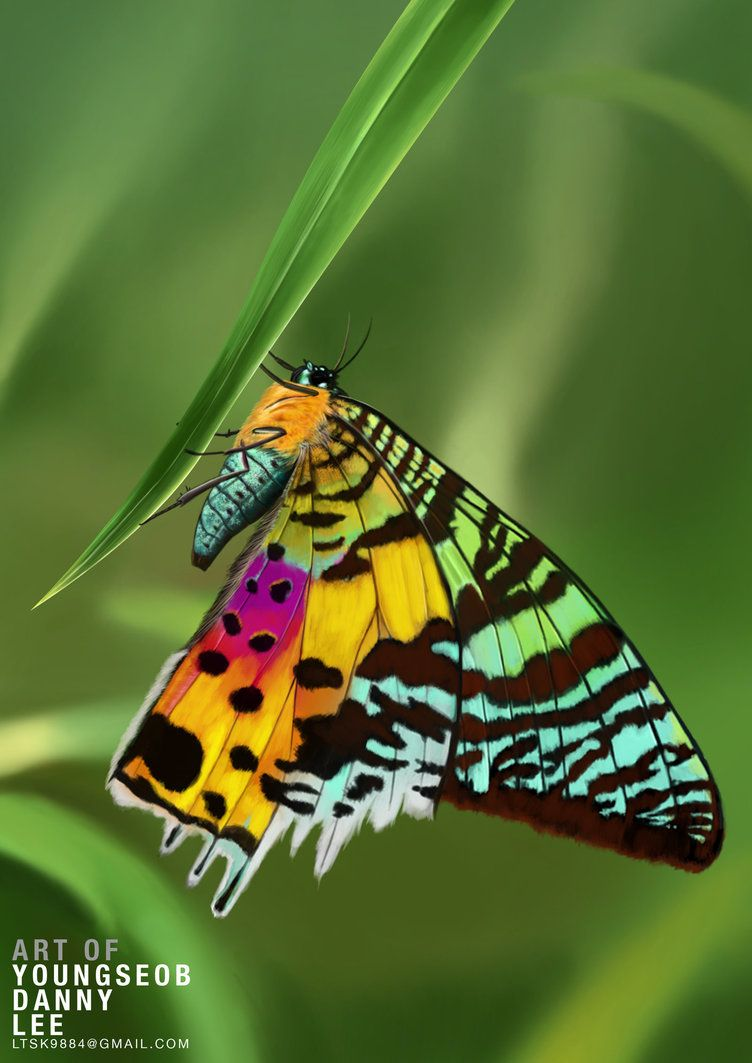 Madagascan Sunset Moth Sunset Moth Moth Beautiful Butterfly Photography