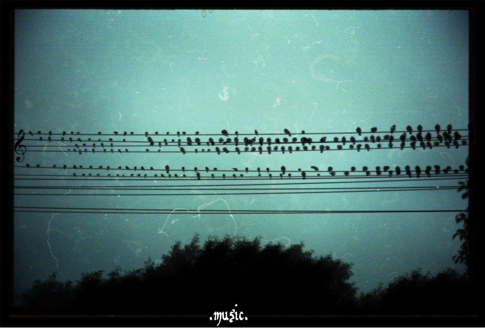 bird music | Music~ | Pinterest