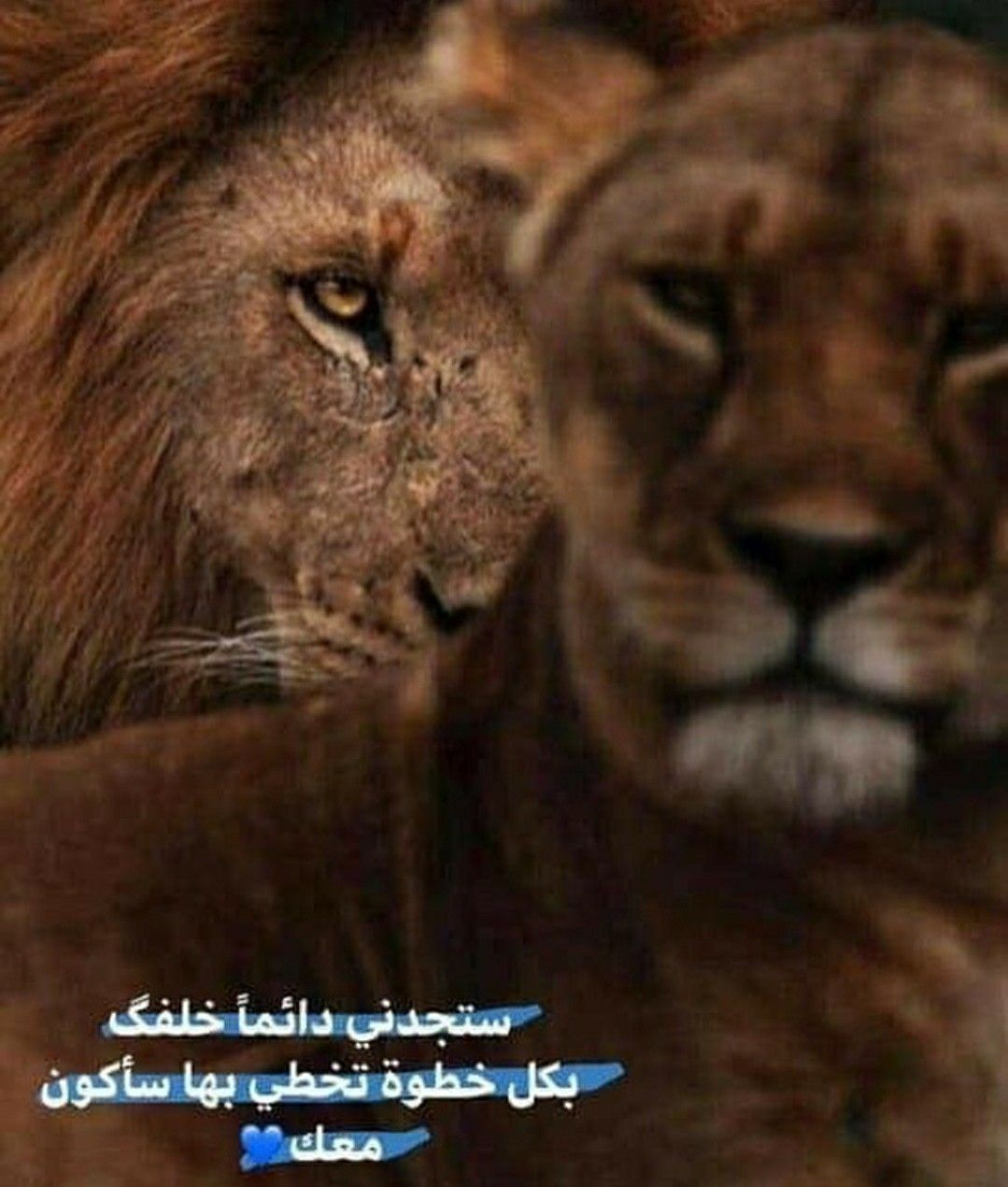 Pin By Asraa On Love In 2020 Funny Arabic Quotes Cute Muslim Couples Animal Silhouette