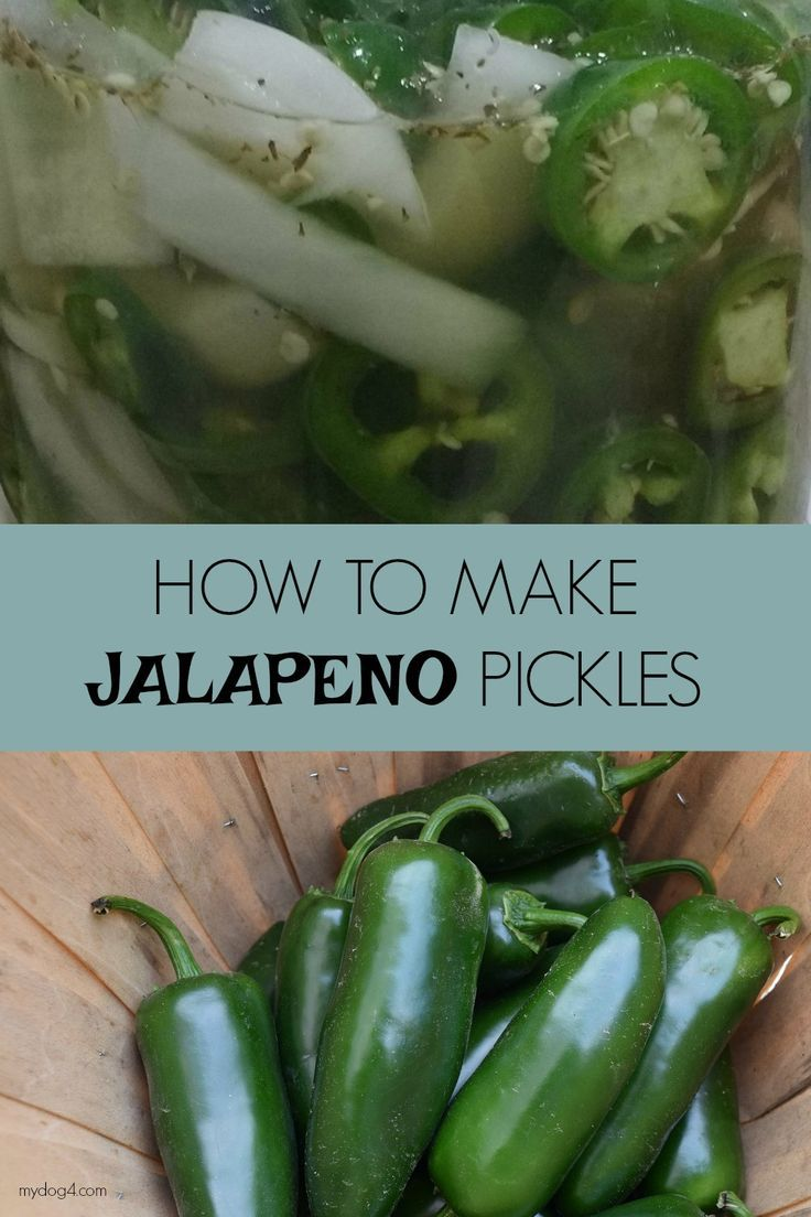 HOW TO MAKE JALAPENO PICKLES Pickles, Jalapeno, How to make