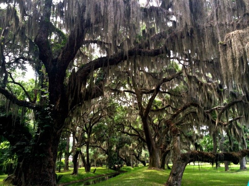 Discovering St Simons Island Places To Visit Pinterest