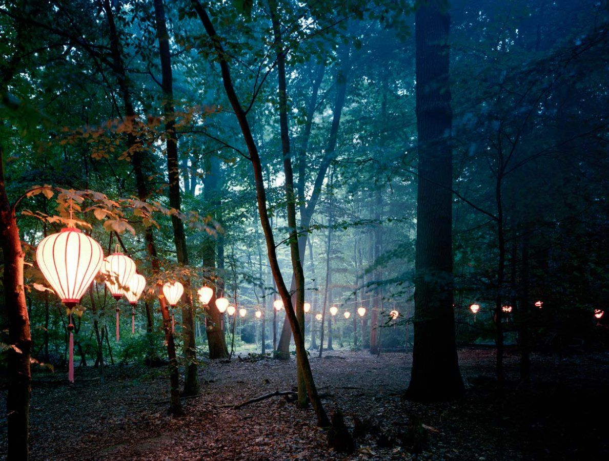 Image Detail For Lights In The Trees Ex Caelo Lux