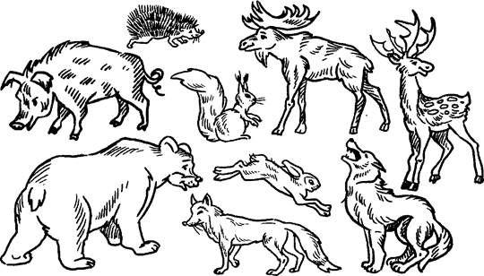 Картинки по запросу раскраски для детей животные дикие ...