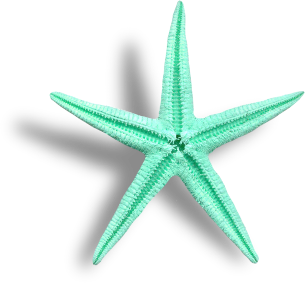 Starfish Images Hd Starfish Transparent Png Image Inexpensive Furniture Furniture Cleaner Furniture Removal