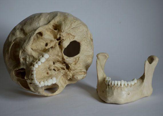 Male Human Skull Replica Skull Human Skull Human Male