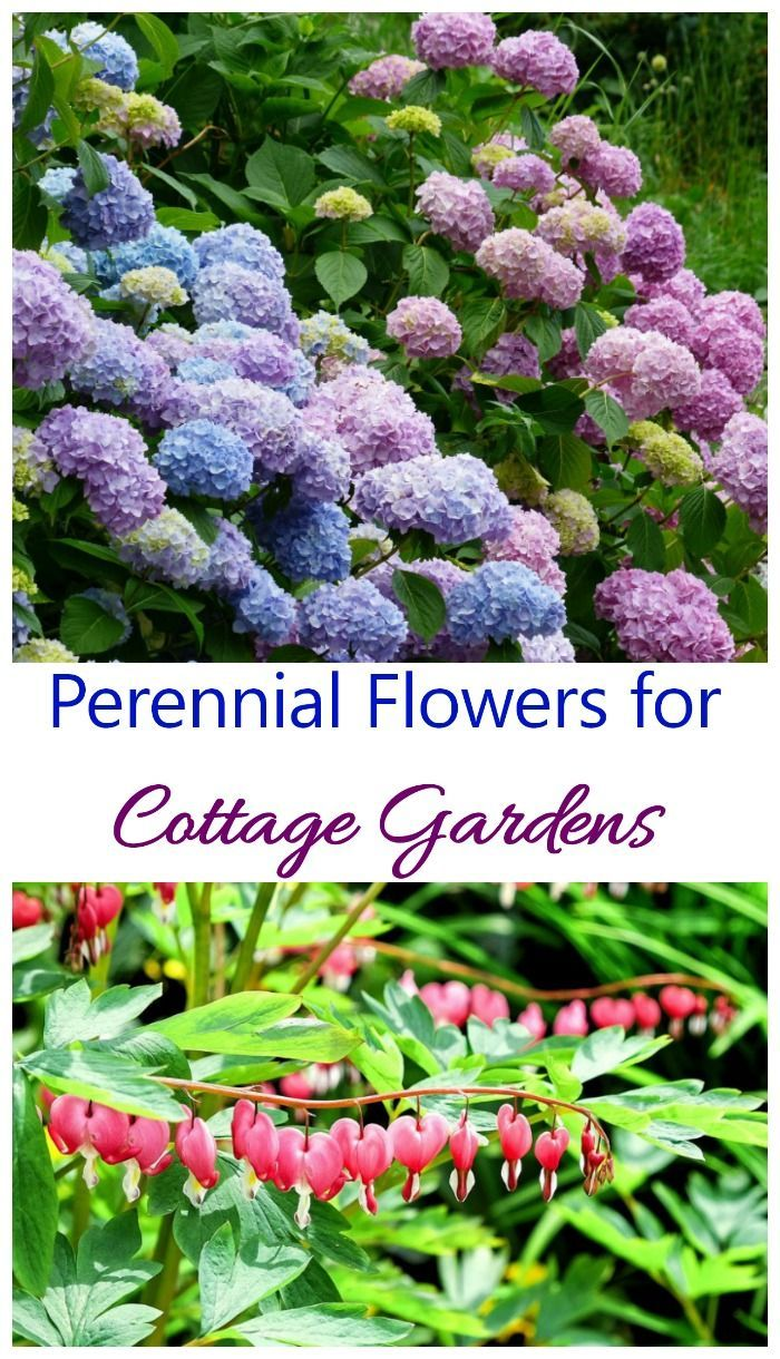 Cottage garden plants perennials annuals bulbs for cottage these perennial flowers for cottage gardens can be planted once and will bloom year after year izmirmasajfo