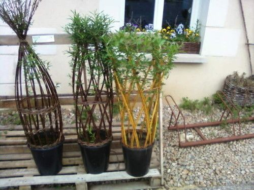 planter des saules tresses - Recherche Google   jardin   Pinterest