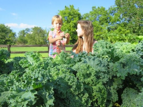 Luke and Sofia picking kale to make kale chips at our family's Ohio farm