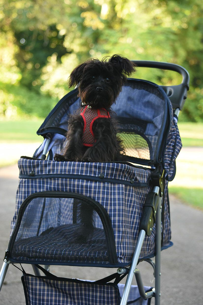 ME and CASH!.... oh and His STROLLER! Dog stroller