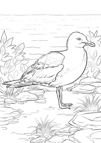 California Gull Coloring Page From Seagulls Category Select From