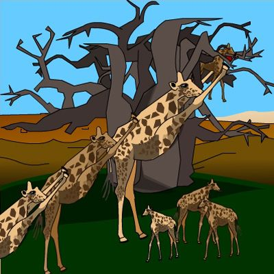 How the giraffe got its long neck