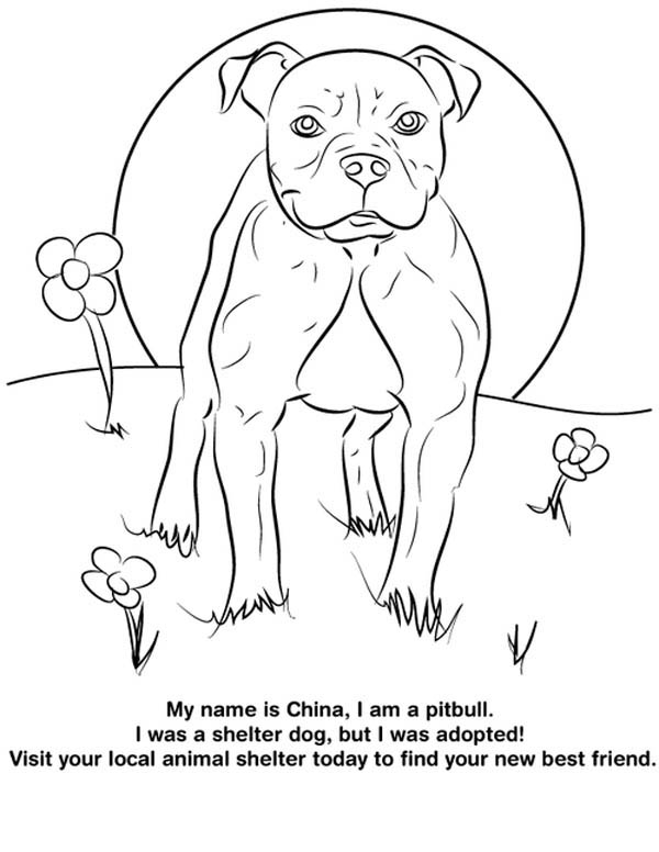 Pitbull From Shelter Dog Coloring Page Coloring Sky Dog Coloring Page Puppy Coloring Pages Cartoon Coloring Pages