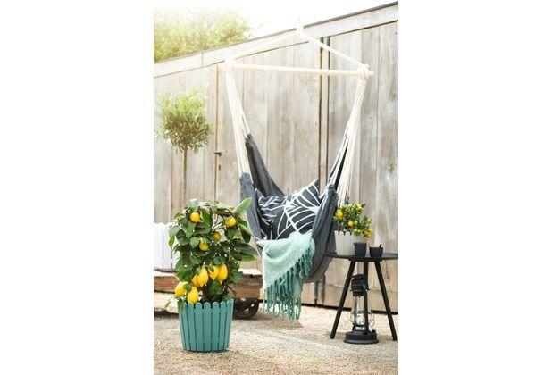 Schöner Pflanzenkübel, der toll auf der Terrasse und auf dem Balkon ...