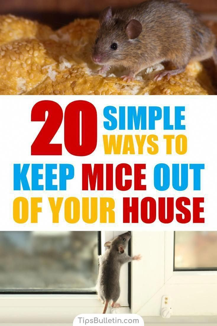 Find out 20 ways to keep mice out of your house with these