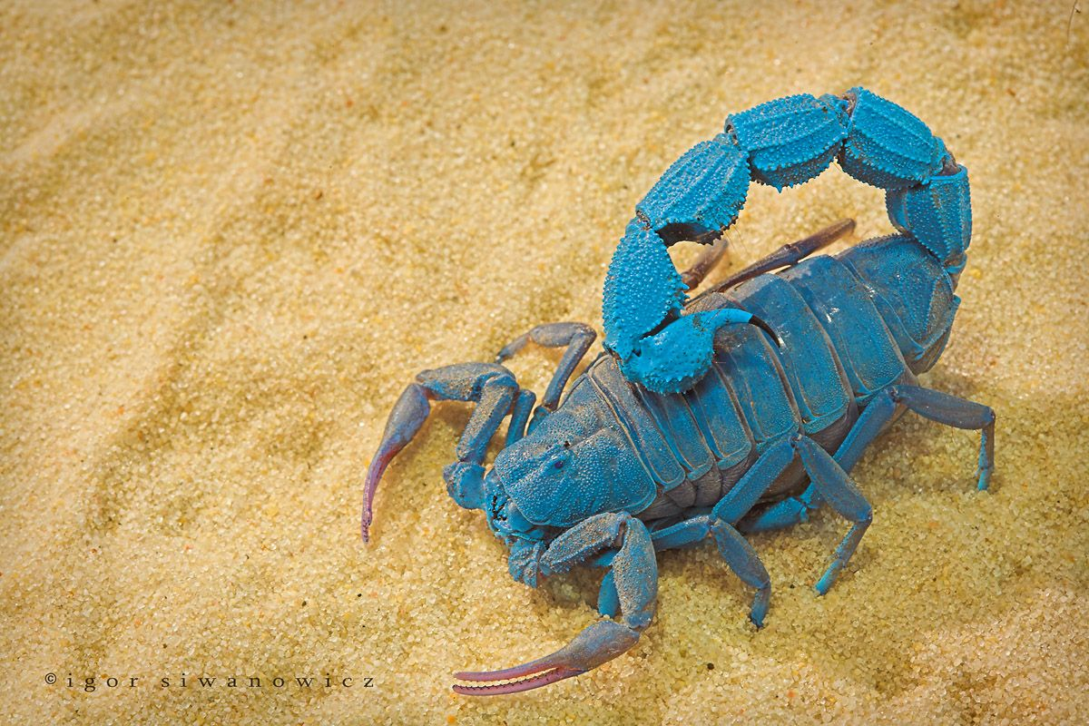 """by """"Blepharopsis"""" on deviantart. You can always rely on this photographer for AMAZING macro shots of exotic creatures."""