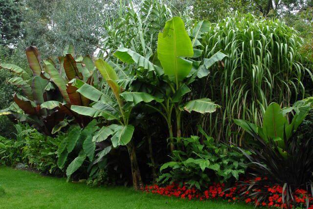 Major Tropical Perimeter Wall Tropical Garden Plants Tropical Garden Design Tropical Landscaping