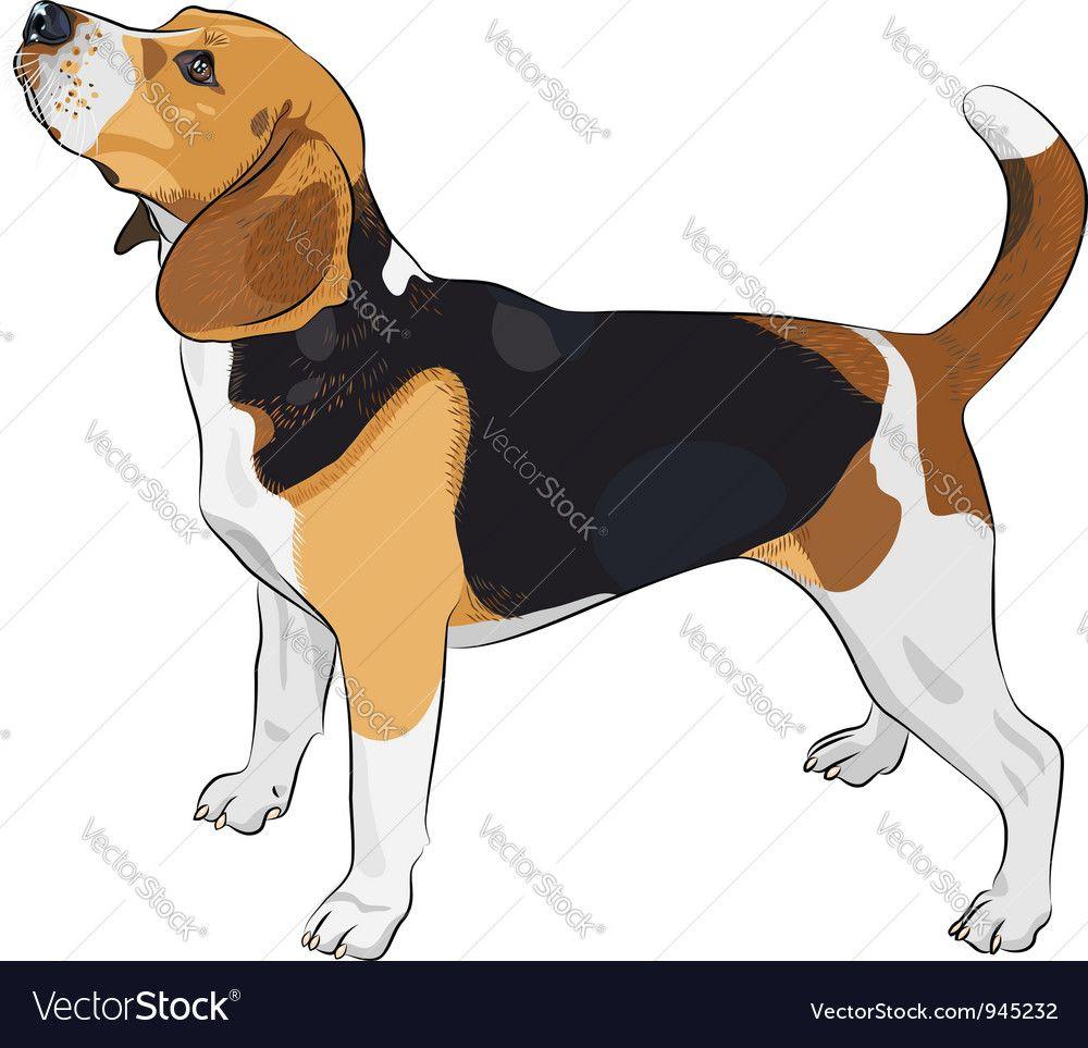 Beagle Dog Vector Image By Olgacov Beagle Dog Dog Vector