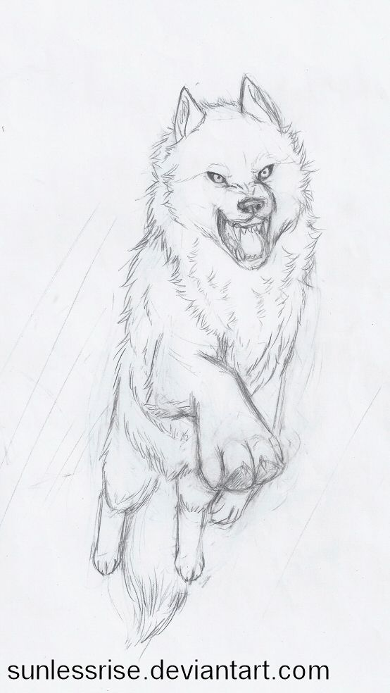 Photo of Fierce Leaping Wolf Sketch by AvongaleArt on DeviantArt