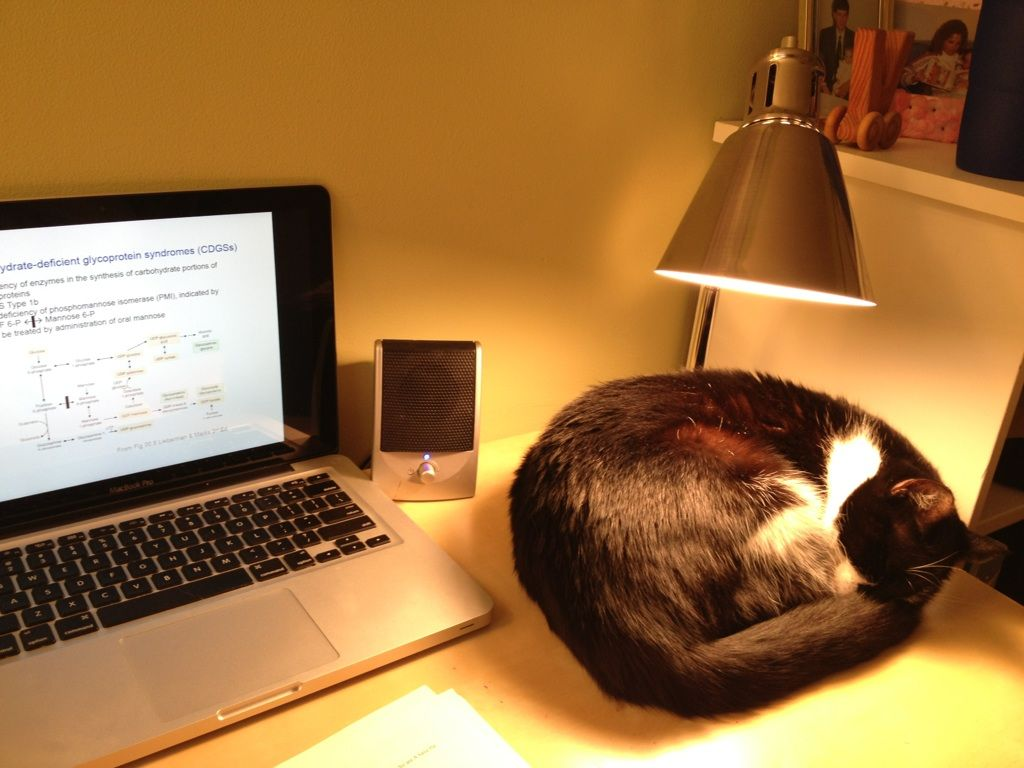 Installation Of A Heating Lamp Always Rectifies The Cat On Keyboard Syndrome Cats Funny Animals Cat Memes