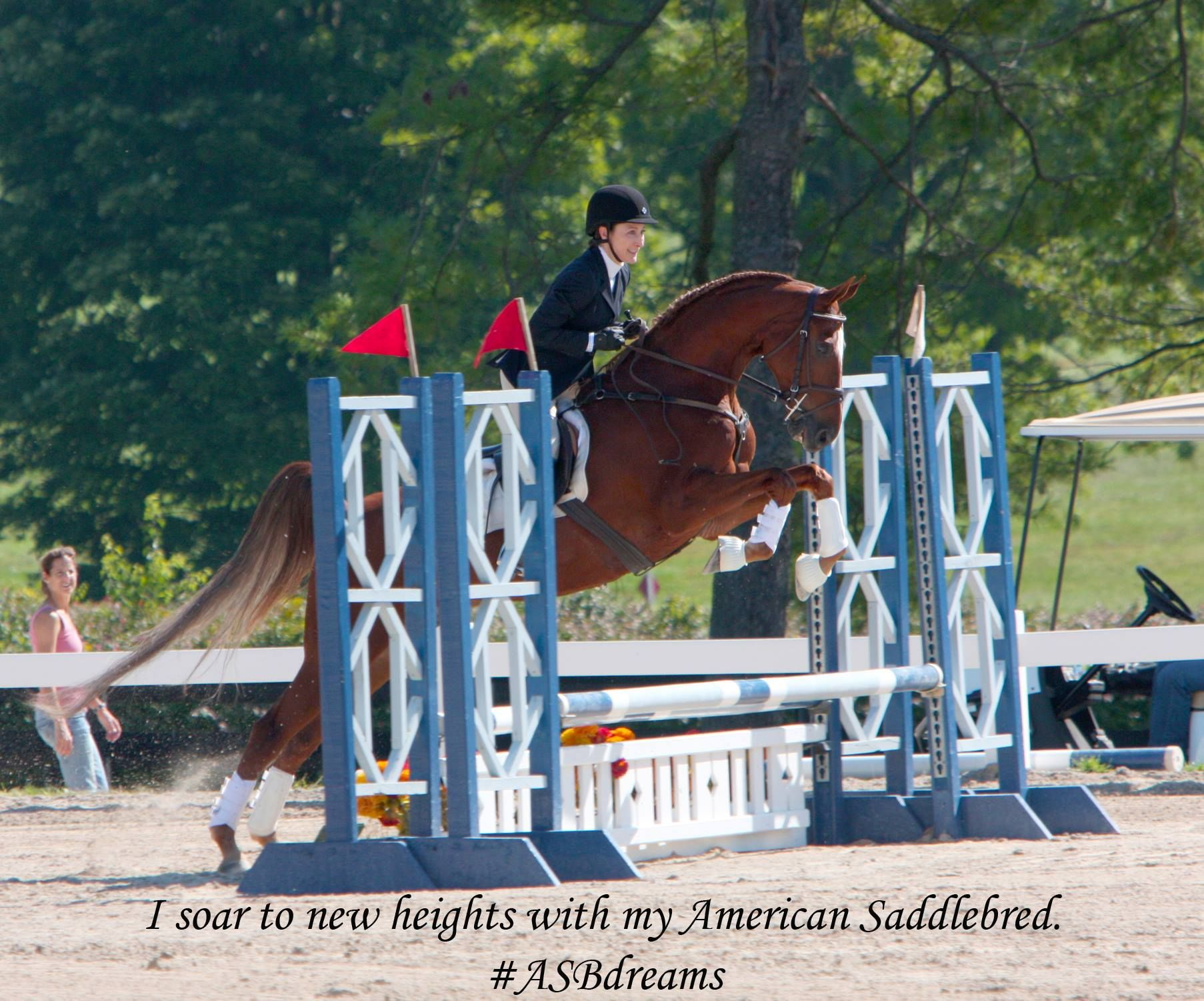 Soar to new heights with an American Saddlebred! # ...