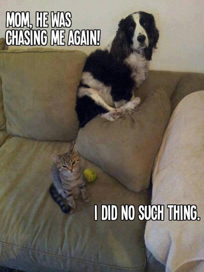 Funny Cats vs Funny Dogs   Funny cat vs dog picture Funny cat vs dog picture