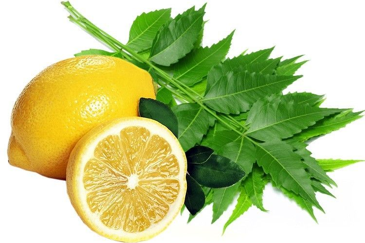 Image result for neem lemon