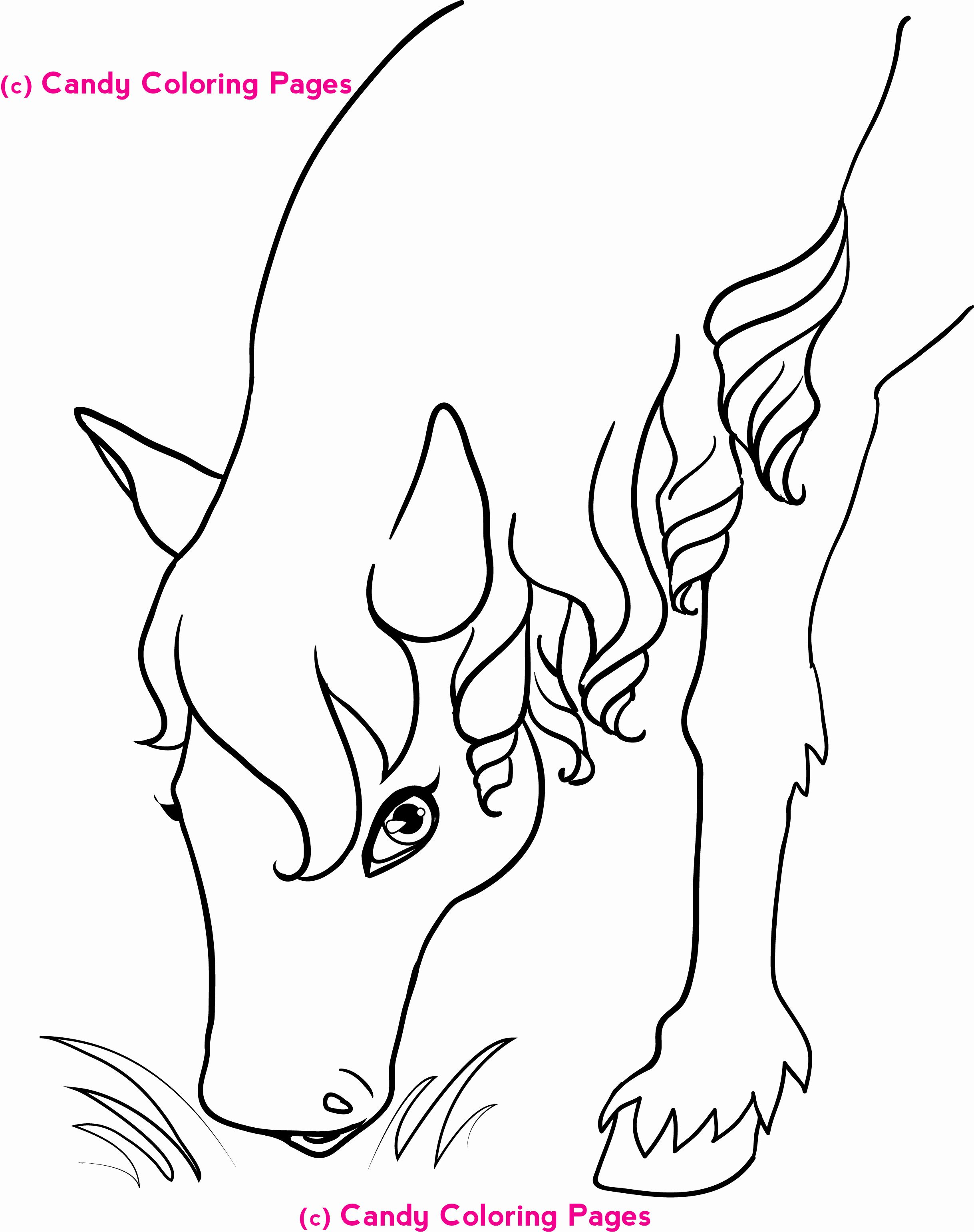 Horse Coloring Pictures To Print Elegant Animal Horse