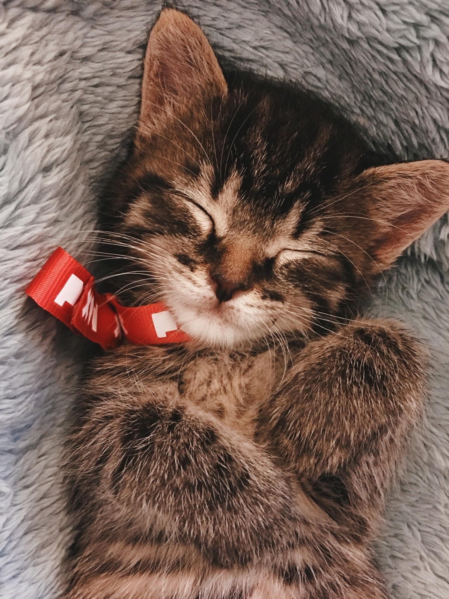 Everyone Meet Milo Kittens Cutest Cute Cats Cats And Kittens