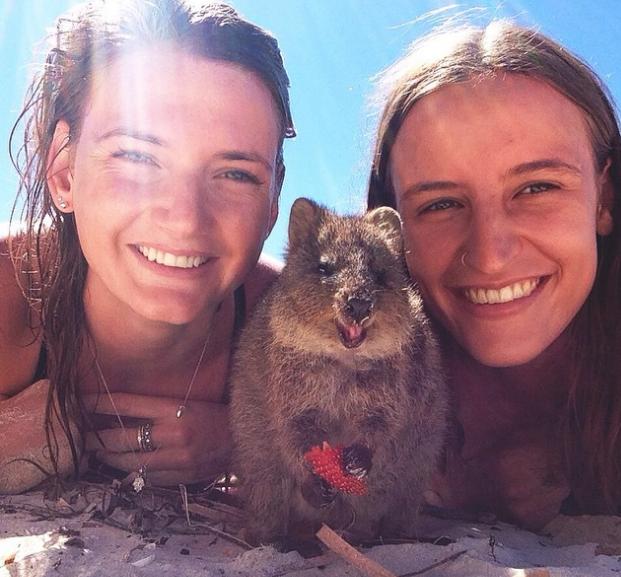 15 Quokka Selfies Too Cute to Ignore Cute animals, Happy