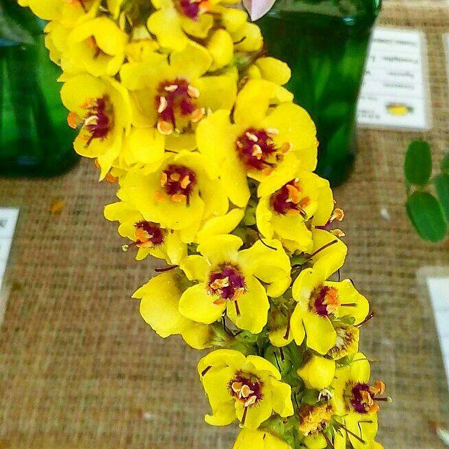 Fiori Spontanei Gialli.Pin Su Fiori Fleures