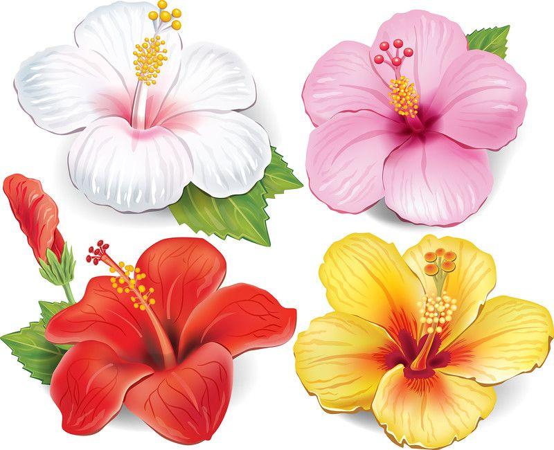 Set of hibiscus pinterest cartes et fleur - Fleure hawaienne ...