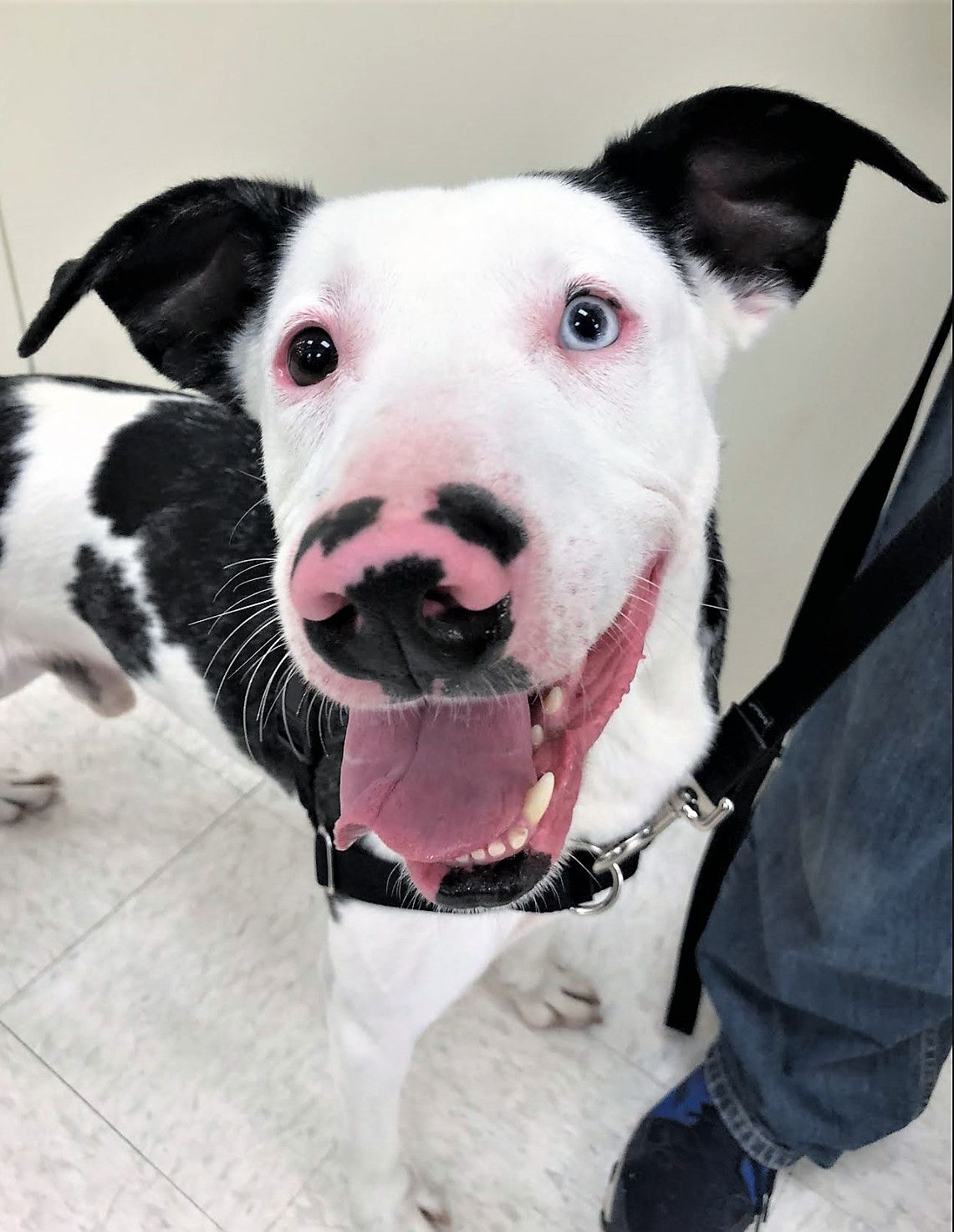 Adopt Scout Local Pup On Adoptable Dogs Dogs Rescue Dogs