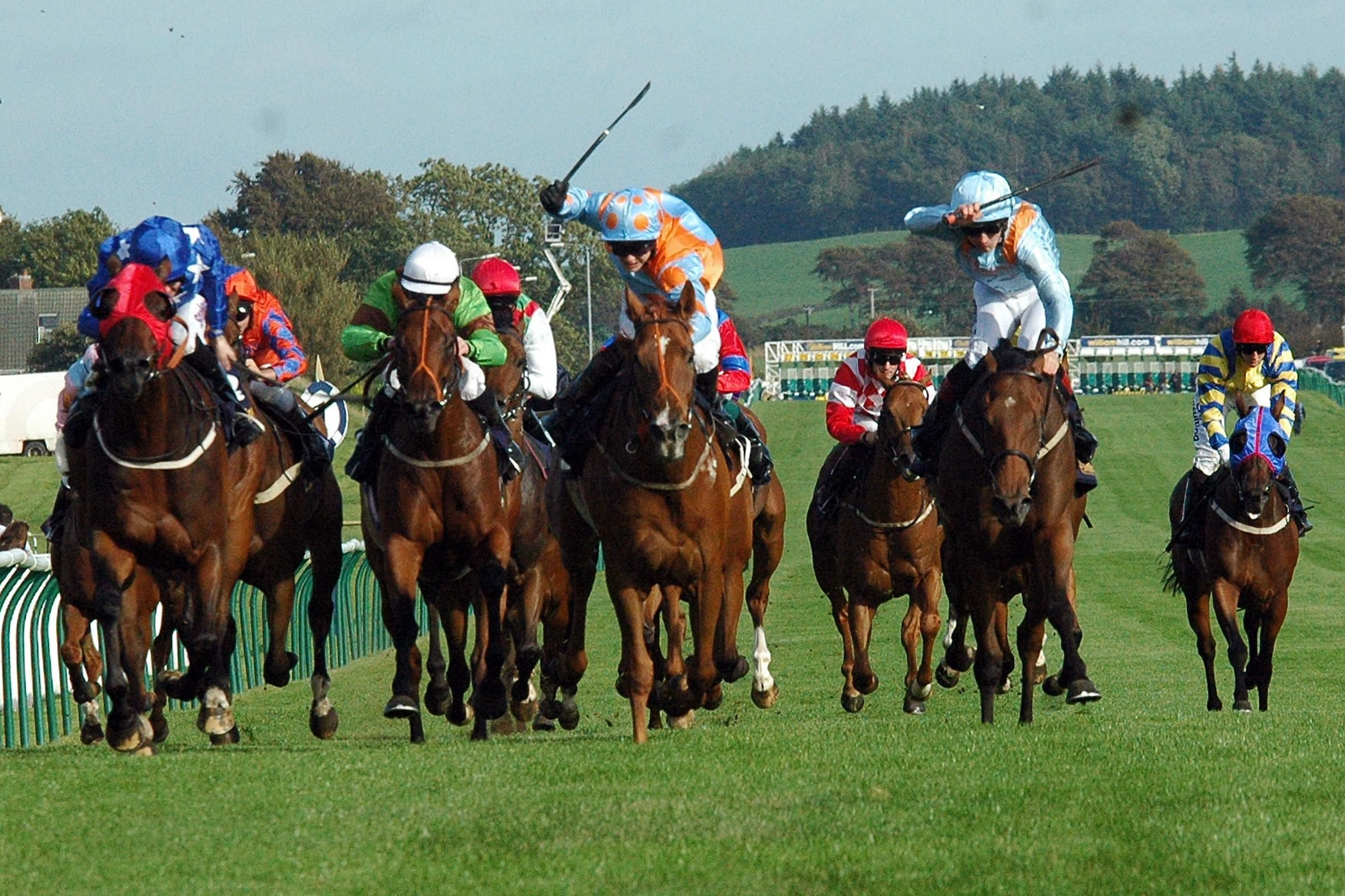 Animal racing betting games on the golf states with sports betting oregon