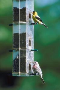 How To Attract Birds A Feeder On An Apartment Balcony Thumbnail