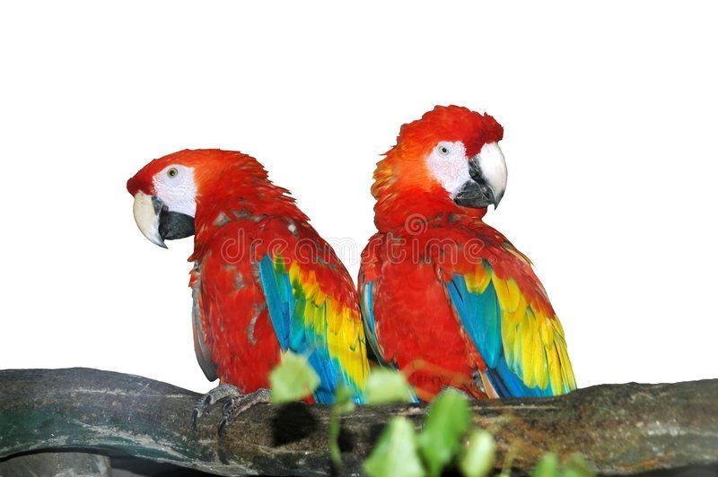 Parrots. In zoo in Riga ,