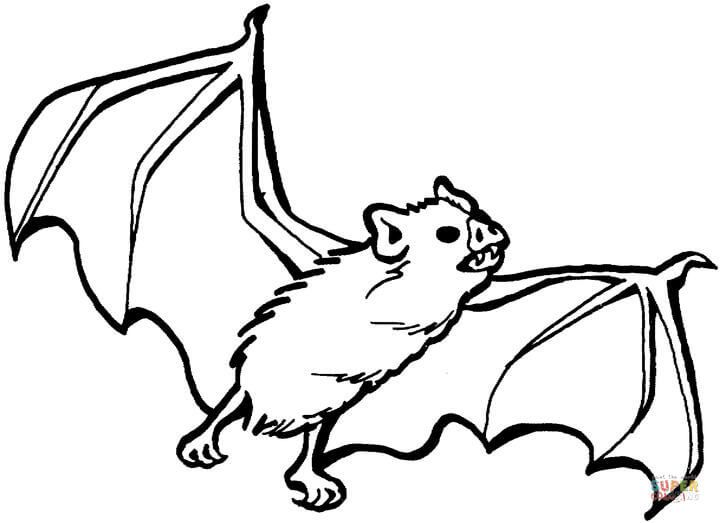 Vampire Bat Coloring Page Free Printable Coloring Pages Bat