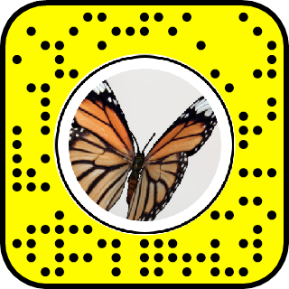 Butterfly Hand Snapchat Lens Filter Butterfly Butterflyhand Filter Lenses Snapchat Lens Filters Snapchat Filter Codes Filters