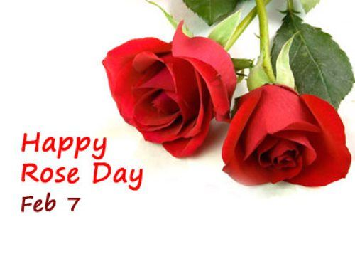 Rose Day Sms Wishes Messages 2017 Whatsapp Dp 3d Pics Red Rose